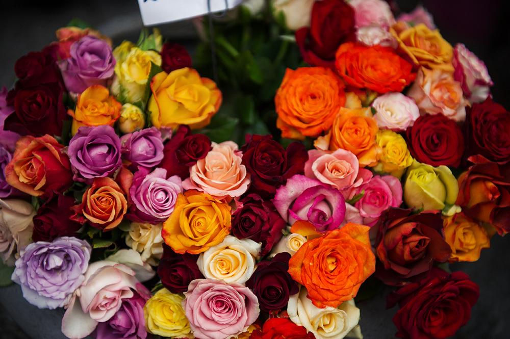 roses, flowers, summer