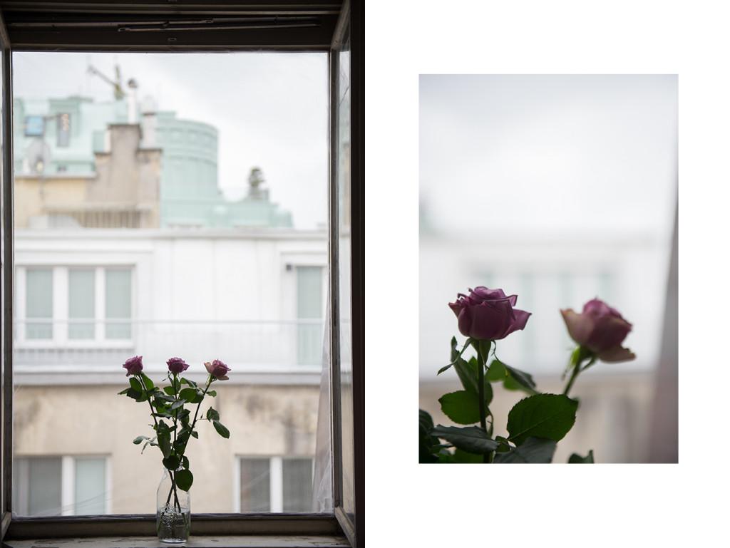 roses, window, rain