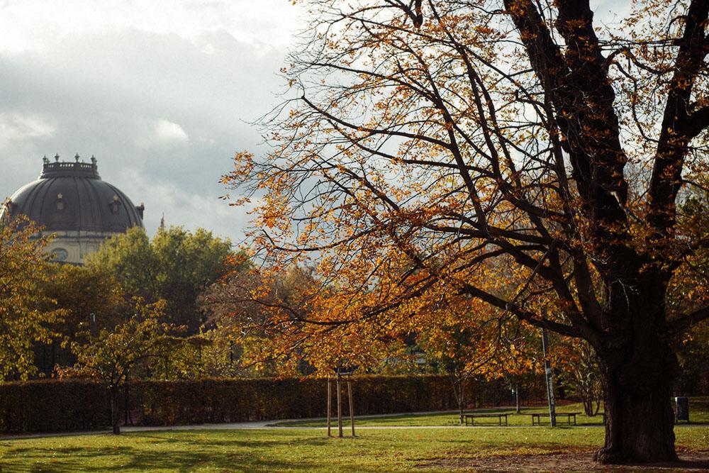 berlin, golden, autumn, monbijou park