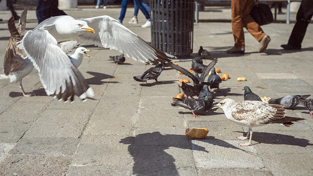 sea gulls, venice, italy, spring