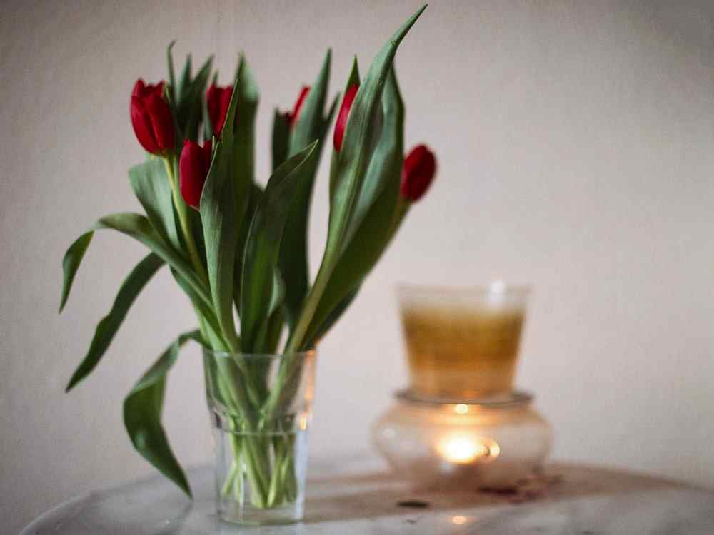 tulips, red, flowers