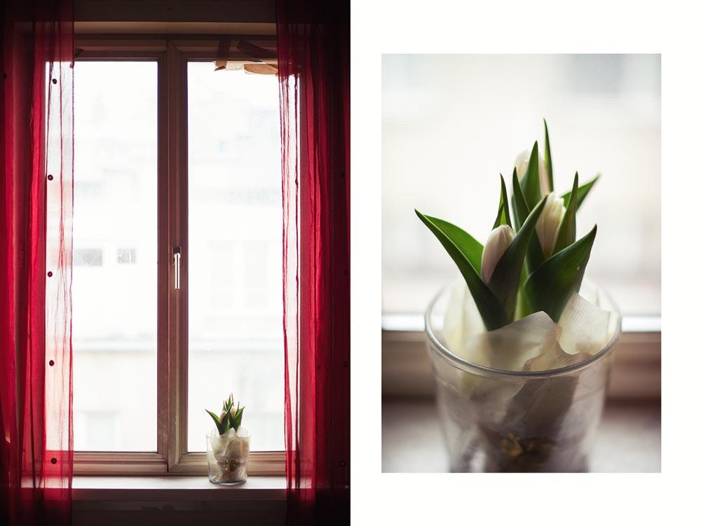 spring, tulips, flowers