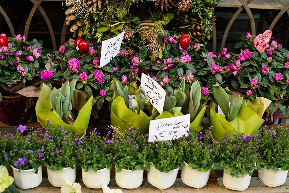 valentines day, flowers, spring, tulips, pretty, vienna