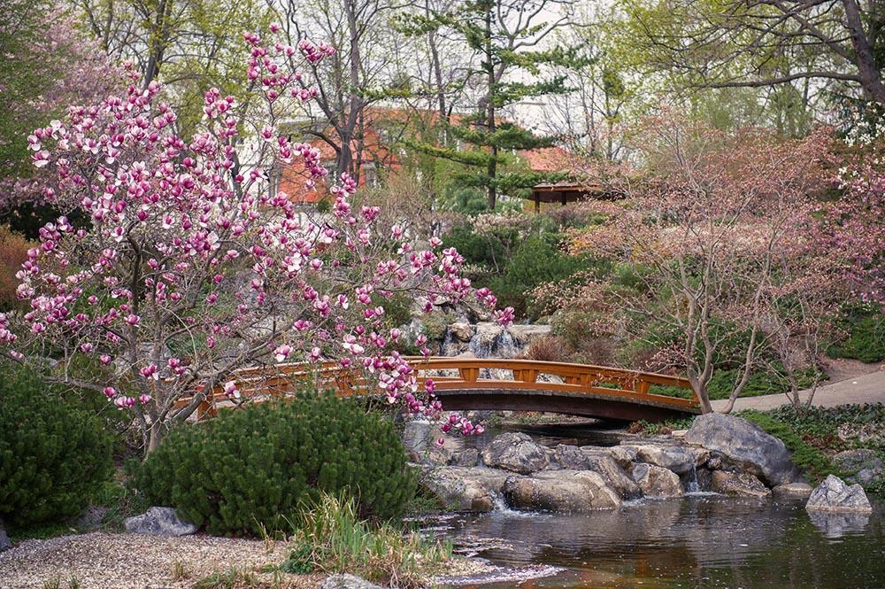 setagaya park, vienna, 1190, doebling, japanese, garden, spring, cherry, blossom, springtime