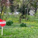 Vienna Parks go ESC