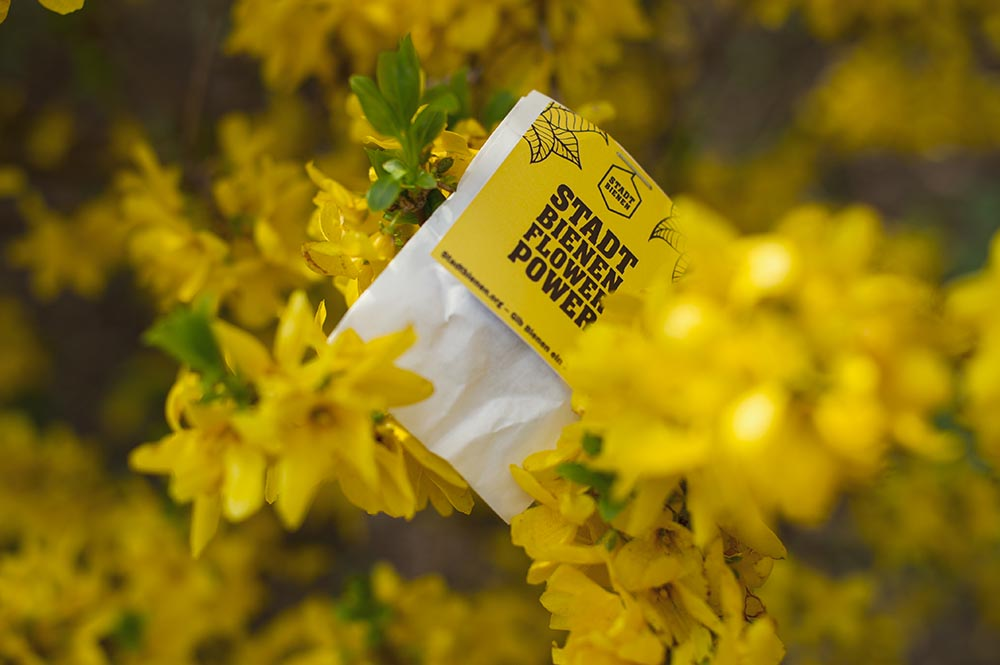 stadtbiene, nature, yellow, spring, flowers, sun