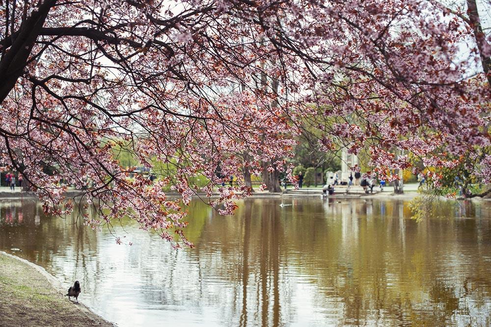 vienna city marathon, vienna, spring, april, stadtpark