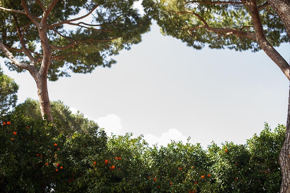 orange, orange garden, aventino, roma, italy,