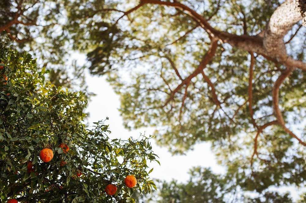 rome, italy, roma, orange, vintage, beauty, amazing, spring