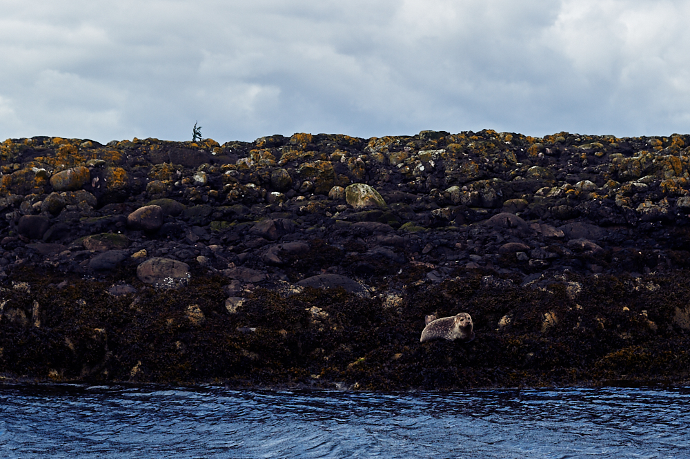 oban, scotland, uk, bay of oban, seal, water, boat trip, my trip to the hightlands