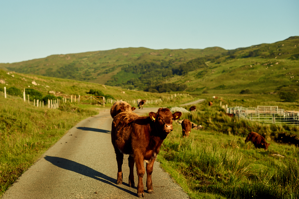 oban, skye, scotland, uk, travel, nature, beauty, ursula schmitz
