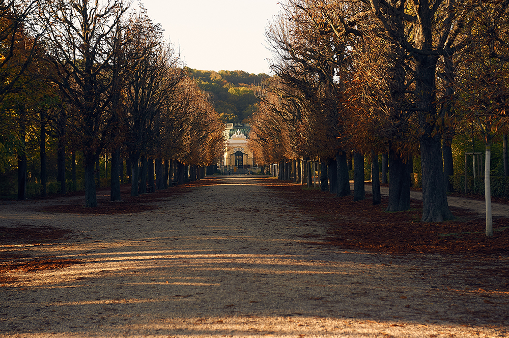 schönbrunn, summer palace, vienna, gardens, autumn, altweibersommer, indian summer, early morning, light, shadow, autumn