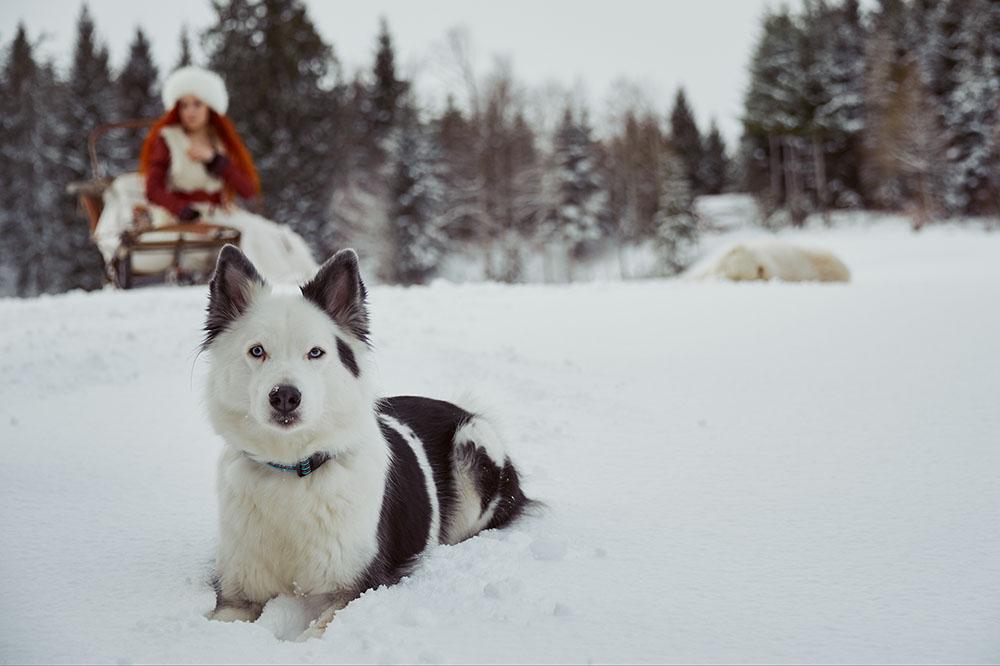 winter, snow, josefsdörfli, switzerland, suisse, photographer, landscape, husky, dog, cute, fun