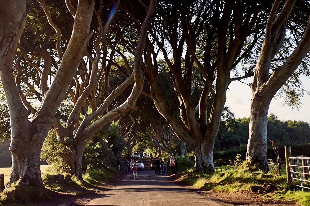 dark hedges, game of thrones, northern ireland, uk, roadtrip