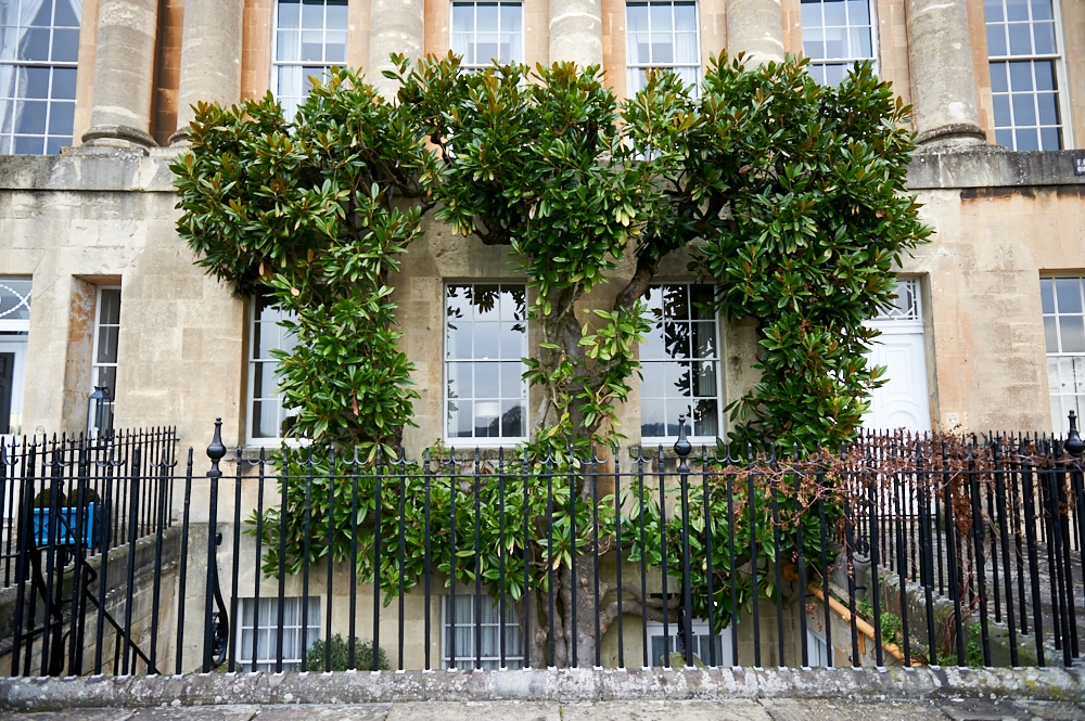 bath, somerset, uk, england, photos and the city, georgian garden, the royal crescent