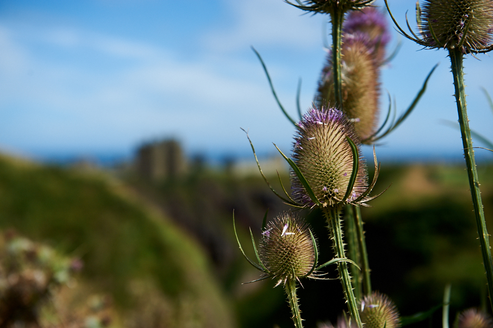 The picturesque and romantic Dunnottar Castle, Stonehaven, near Aberdeen.