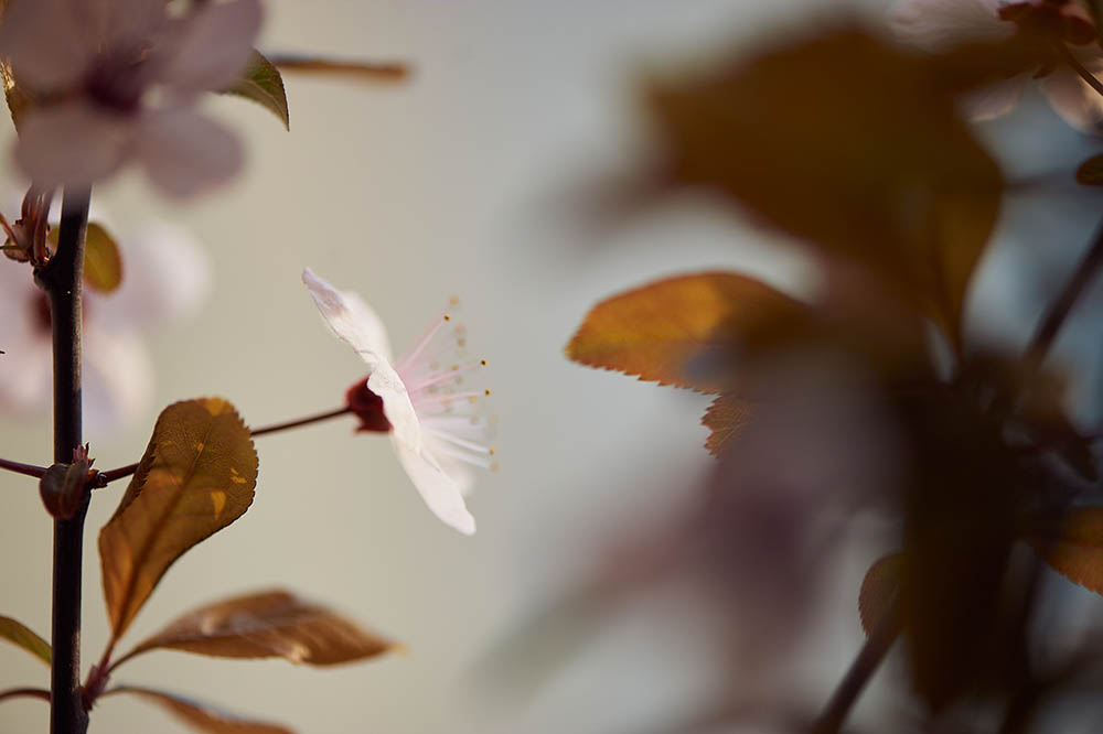 Photo stillife with some spring blooms, getting spring inside your home