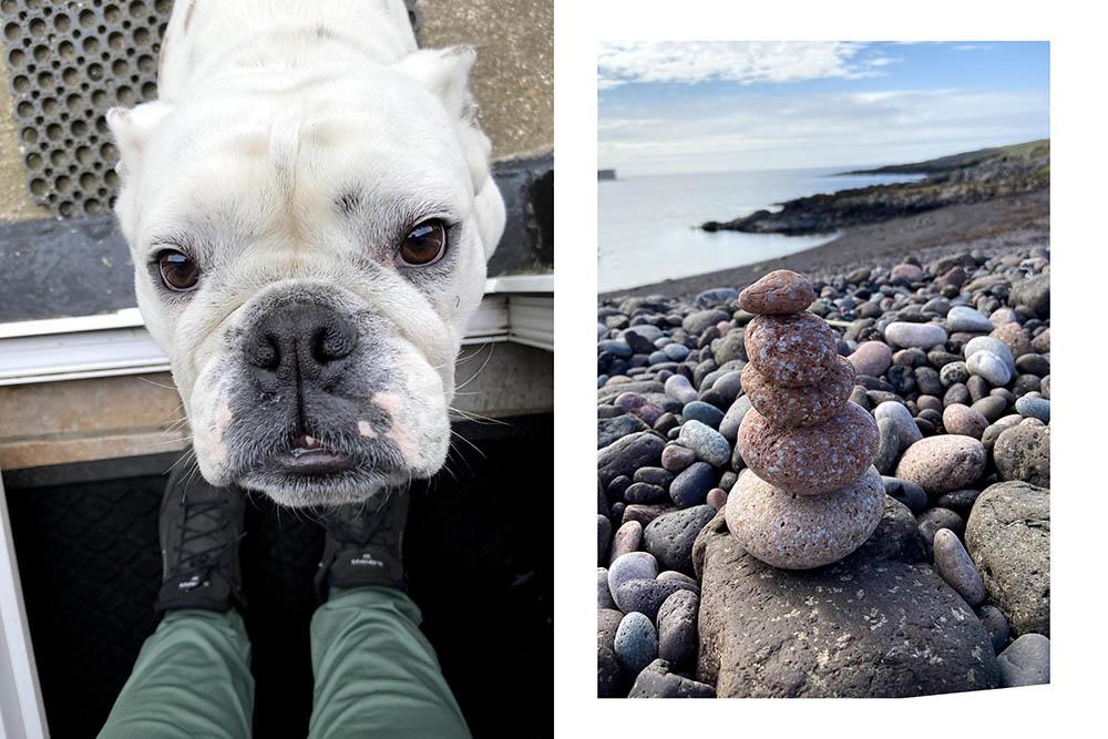 a friendly dog in shetland