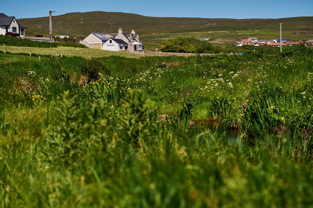 walking in hoswick in shetland, scotland